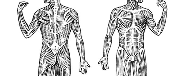 Fra syg og skrøbelig til anatomi-model