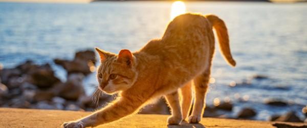 Pilatesmetoden – baseret på dyrenes naturlige bevægelser